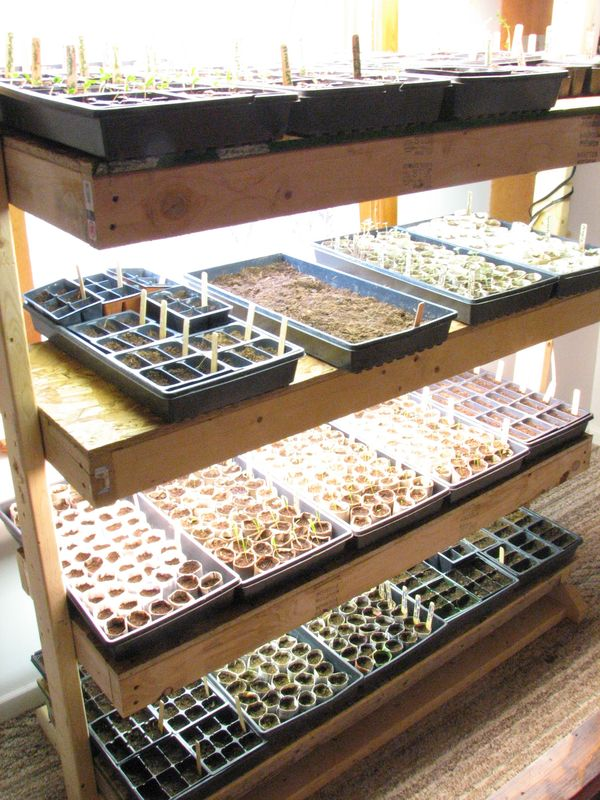 Indoor Greenhouse Seed Starting