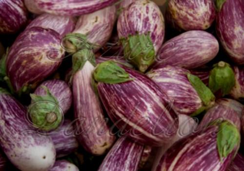 Rosa.eggplant